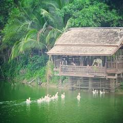 แถวบ้านมีสวนสัตว์นะว่าไป!!! XD ฮ่าๆๆ #วังมัจฉา #ปลาไม่ทำงาน #ห่านน่ารัก #มาทักแขก #แต่งกลอนเลอะเทอะ!!! >_<