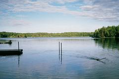 Hugo (JohannesM) Tags: summer dog lake swimming july stick hugo jackrussellterrier fetching fujisuperia400 leicamp 2013 35mmsummicronasph jmnesjn