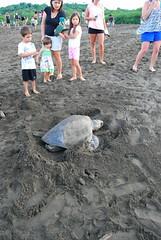 20130803_1317 (austinhunters) Tags: costarica seaturtle duplicate tortugas oliveridley 2013 arribadas playaostional