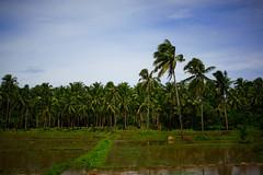 Field (sneakymama) Tags: road philippines ontheroad palawan