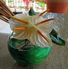 A Traditional Mauritian Welcome (littlestschnauzer) Tags: flowers vacation white holiday flower beach canon hotel petals pretty peace entrance august resort sugar ixus lilly tropical vase waxy lillies welcome arrival anthurium mauritius decor arrangement 2013 elementsorganizer11