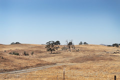 Baked (skipmoore) Tags: california grassland chaparral mariposacounty