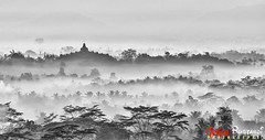 Borobudur from Setumbu hill (T Ξ Ξ J Ξ) Tags: indonesia nikkor borobudur magelang d300 teeje nikon70200mmf28 setumbu punthuk