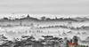 Borobudur from Setumbu hill (T Ξ Ξ J Ξ) Tags: indonesia nikkor borobudur magelang d300 teeje nikon70200mmf28 setumbu punthuk