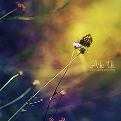 Fairy (Ark. Us.) Tags: blue light macro colors yellow butterfly colorful purple magic multicolore