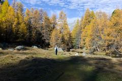 il viandant l'atun (Toni_V) Tags: autumn alps nature landscape schweiz switzerland europe suisse hiking herbst rangefinder alpen svizzera albula wanderung m9 preda graubünden grisons albulatal svizra bergün summiluxm 2013 grischun 35mmf14asph 35lux messsucher lärchen 131026 ©toniv leicam9 valdalvra l1014278