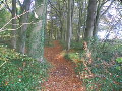 path (Martha-Ann48) Tags: wood autumn trees water leaves woodland stream path walk yorkshire windy east beech bracing harpham
