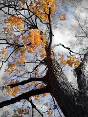 (damaris.reda) Tags: trees blackamdwhite tectures