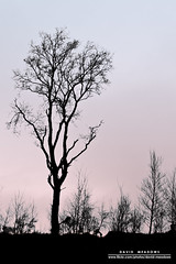 Tree Silhouette (DMeadows) Tags: trees black tree silhouette photoshop branches gradient outline edit davidmeadows dmeadows davidameadows dameadows