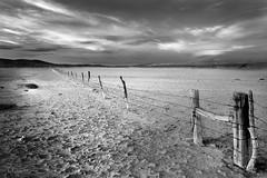 Fence on Playa_1RR3554 (RRobertsphoto) Tags: blackandwhite newmexico playa desolate isolated barbedwirefence blackwhitephotos pointlessmanmadestuff