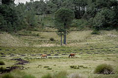 Horse Landscape (enrav75) Tags: horses horse naturaleza nature landscape mexico caballos woods paisaje viajes bosque trips veracruz xalapa jalapa 2013 vallealegre