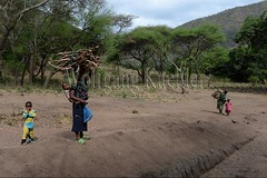 10071664 (wolfgangkaehler) Tags: africa people woman tanzania person african firewood carrying lakemanyara eastafrica eastafrican tanzanian environmentalimpact tanzaniaafrica environmentalissue lakemanyaratanzania environmentalconcern {vision}:{outdoor}=099 {vision}:{mountain}=0593
