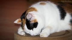 BALL KOMM RAUS DU BIST UMZINGELT (rentmam1) Tags: cats katzen