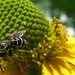 Summer-Bee