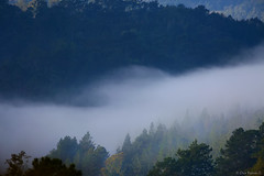Neblina en la cordillera (Dax M. Roman E.) Tags: amanecer neblina fro niebla pinares republicadominicana cordilleracentral bosquehmedo laespaola lahispaniola daxroman