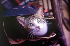 April Fool Birthday Cat (Coquine!) Tags: cat bag katze mallorca tita sweetest aprilfool christianleyk