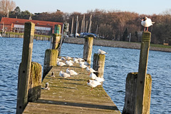 Travemunde jetty with gulls (Fuhirees-away for a couple of weeks) Tags: water germany lens spring jetty gulls sigma os program lubeck ae dg 2014 travemunde 24105mm hsm