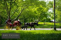 Horse and Carriage, Central Park (amycicconi) Tags: nyc newyorkcity newyork centralpark horseandcarriage
