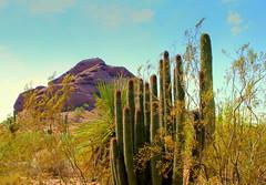 Cactus and Rock (austexican718) Tags: cactus landscape phoenix rock desert southwest arid arizona