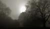 Trees in a silver light (Matt Morey) Tags: stealingshadows
