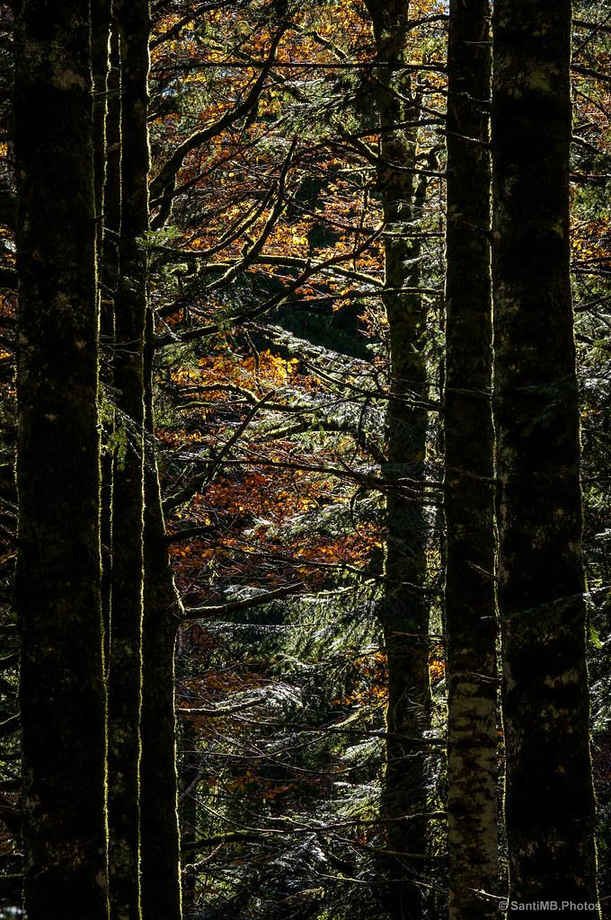El baile de los árboles