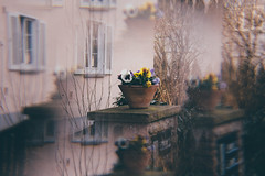 Flower Pot (freyavev) Tags: korntal badenwürttemberg germany deutschland vase pot flowerpot flowers house fence prism prismeffect blurry cokin cokinfilter filter vsco outdoor detail urbandetails urban canon canon700d