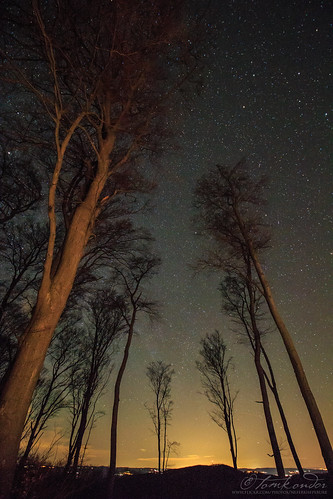 Old beech trees under the night sky