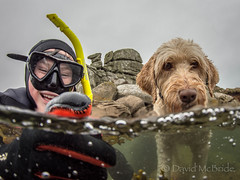 2017 Kian Fern & Camel- half term (davidmcbridephotography) Tags: red labradoodle dog snorkeller swimmer camel spilt shot sea united kingdom cornwal isles scilly scillies boy wetsuit seaweed exhilerating cold freezing porthellick beach adventure granite awesome fun moment son pooch clear sharp nikon nauticam zen freinds inseperable dynamic together loaded biscuits like frollicks stupid lark ranger holiday pet exposure sunlight digital sol