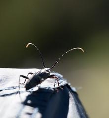 Beetle on Canvas