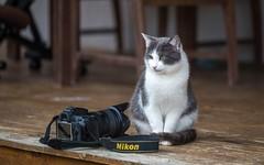 kittens (39) (Vlado Ferenčić) Tags: catsdogs cats animals animalplanet zagorje hrvatska kitty kittens kittysuperstar nikond600 croatia sigma15028macro closeup vladoferencic
