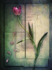 Spring Tulip (jimlaskowicz) Tags: artistic dream painterly art impressionistic surreal tulip