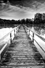 Dead-End Dock (Andy Henry Photo) Tags: blackandwhite water clouds contrast duck high boards dock pond symmetry