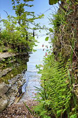ferns and columbine_4855 (claudia5573) Tags: flowers lakeerie cliffs limestone columbine ferns kelleysisland