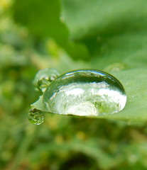 Drop (pgauti) Tags: macro green nikon drop vert coolpix gouttes aw110 coolpixaw110