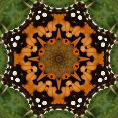 kaleidoscope (little_auk) Tags: nature butterfly insect kaleidoscope tortoiseshell