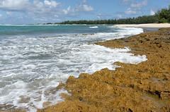 A few days in O'ahu - 9 (Bernard Languillier) Tags: usa hawaii oahu northshore d800