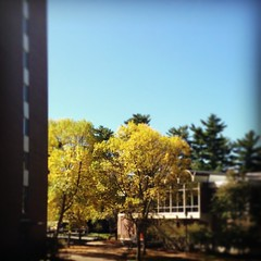 "Where is your favorite campus spot for foliage? #UNHSocial • <a style=""font-size:0.8em;"" href=""http://www.flickr.com/photos/69402606@N06/10027671385/"" target=""_blank"">View on Flickr</a>"