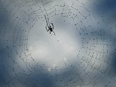 Isty Bitsy Spider... (Shelby's Trail) Tags: blue spider drops bokeh web screen bugs beasties hss eightdaysaweek twtme sliderssunday thesundaychallenge