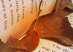 leaves (BMZYGrace) Tags: autumn fall leaves print book words leaf page hh52y342