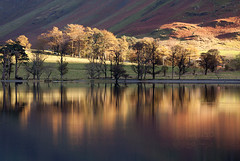 Backlit Pines  Buttermere (GOLDENORFE) Tags: lakedistrict butermere