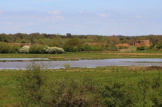 Pulborough Brooks RSPB West Sussex (3)