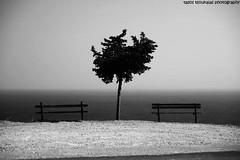 ''room with a view''...2008 (  1.000.000views!!!!) Tags: trees sea blackandwhite monochrome canon landscape 350d blackwhite outdoor greece serene samos blackdiamond tasostsoukalasphotography
