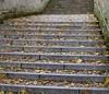 Petřín Hill (troutwerks) Tags: autumn fall october raw prague praha foliage czechrepublic ruska travelswpatrick