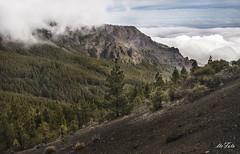 Montaña Ayosa (letrucas) Tags: españa tenerife canaryislands pinares islascanarias pinuscanariensis ayosa calderadepedrogil leandrotrujillocasañas montañaayosa