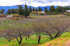 (Digital_trance) Tags: autumn fall landscape maple fallcolors taiwan autumncolors     taroko        tarokonationalpark            fushoushan 70d   14         5d2 5dii canon5dmarkii canon5dmarkiii  5d3 canon70d     5diii  2013