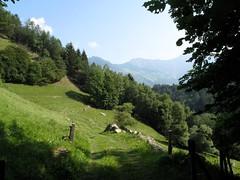 Orsieres - Martigny (12.07.13) 47 (rouilleralain) Tags: valais sembrancher valdentremont stbernardexpress orsires viafrancigena