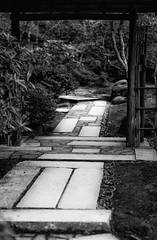 Walking the Path mono (mfenne) Tags: christmas leica winter me monochrome garden portland japanese phil path zen dralaimagesmarlowefenne