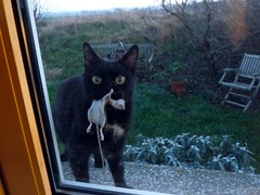 Look who's coming for dinner (LaWendeltreppe) Tags: cat mouse luisa