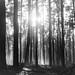 enchanted forest - märchenwald