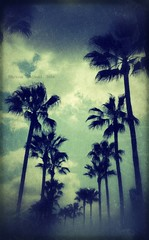 14 / 52  Camino a los cielos (~eriani~) Tags: blue sky green beautiful clouds landscape island losangeles teal cellphone peaceful tranquility palmtrees longbeach palmtree ethereal mobilephone southerncalifornia magical tranquil android 52weeks 52weekproject pixlr 52weekchallenge androidography snapsee erickagiulianiphotography